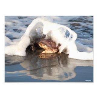 caranguejo de 24X18 Dungeness com o surf que Impressão De Foto