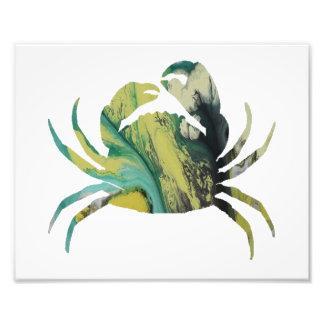 Caranguejo Impressão De Foto