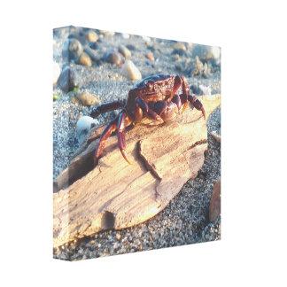 Caranguejo no impressão das canvas da madeira