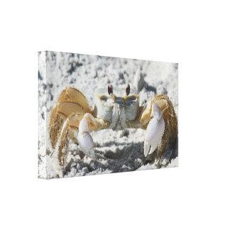 Caranguejo terrestre nas canvas da areia