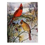 Cardeais no inverno cartão postal