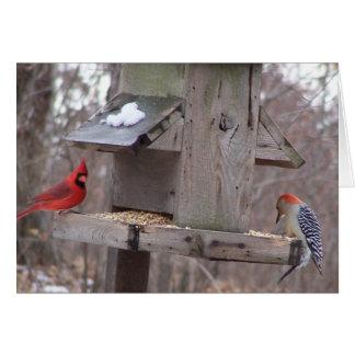 Cardeal de Woodpecker&Male Cartão Comemorativo