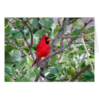 Cardeal masculino na árvore de limão - cartão