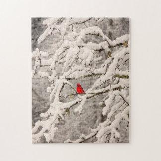 Cardeal no quebra-cabeça da neve