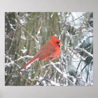 Cardeal vermelho no inverno pôster
