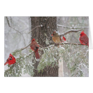 Cardeal vermelho - SnowBirds Cartão De Nota