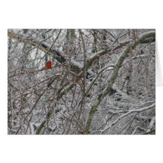 Cardinal Cartão Comemorativo