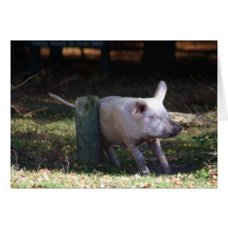 Carne de porco que risca o cartão