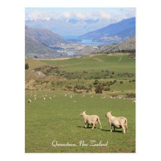 Carneiros com uma vista, Queenstown NZ - cartão