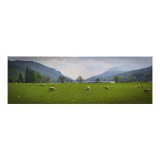 Carneiros de Oich do Loch Impressão De Foto
