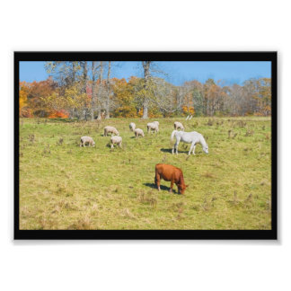 Carneiros do cavalo da vaca que pastam na grama no fotografias