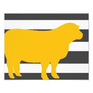 carneiros impressão de foto