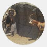 Carneiros selvagens de Mouflon que riscam 1 Adesivo Em Formato Redondo