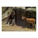 Carneiros selvagens de Mouflon que riscam 1 Cartão