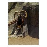 Carneiros selvagens de Mouflon que riscam 1 Cartao