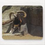 Carneiros selvagens de Mouflon que riscam 1 Mousepad