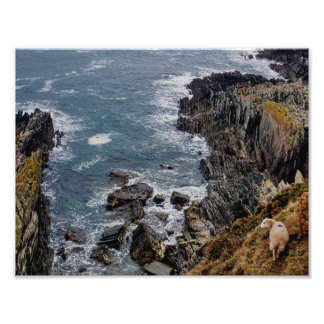 Carneiros sul de Devon no trajeto remoto do penhas Foto
