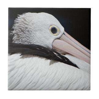 Caro Pelicano