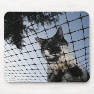 Carregue o gato no por do sol Mousepad
