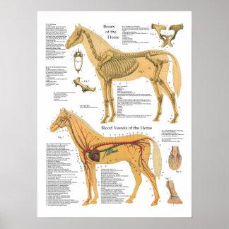 Carta arterial esqueletal do veterinário da pôster