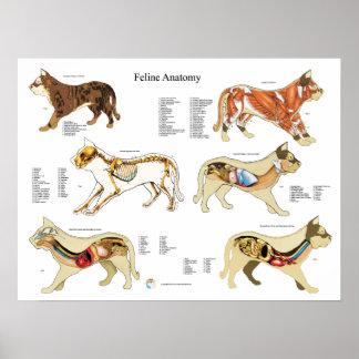 Carta da parede do poster da anatomia do gato