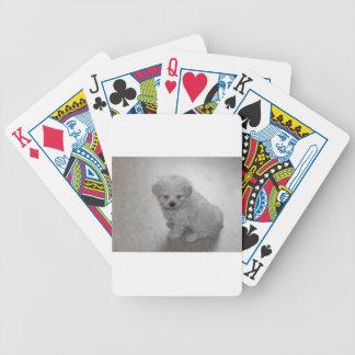 Carta De Baralho filhote de cachorro maltês