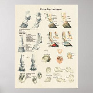 Carta do Farrier da anatomia do pé do casco do pé Pôster