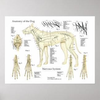 Carta do poster da anatomia do sistema nervoso do