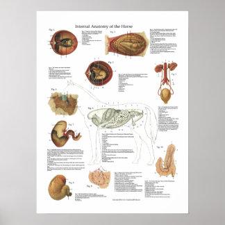 Carta do veterinário da anatomia dos órgãos pôster