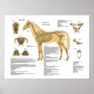 Carta esqueletal do poster da anatomia do cavalo