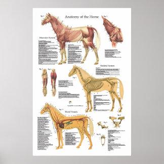 Carta esqueletal do veterinário da anatomia do pôster