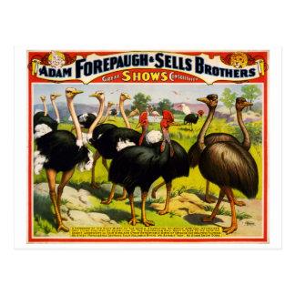cartão 1898 do poster vintage do circo da avestruz