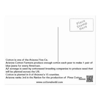 Cartão 1912 do fato do algodão da arizona
