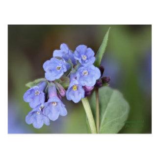 Cartão #1 do Bluebell da montanha