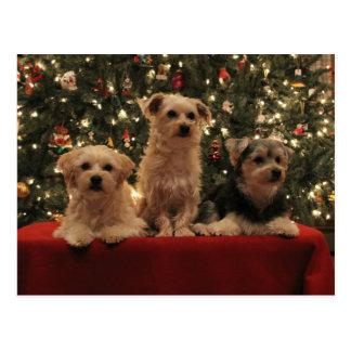 Cartão 1 do Natal do filhote de cachorro