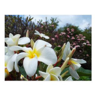 Cartão 1 dos Plumerias de Waikoloa