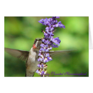 Cartão 2 do colibri