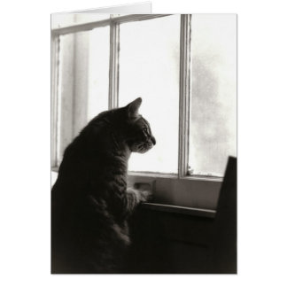 Cartão #2 do gato