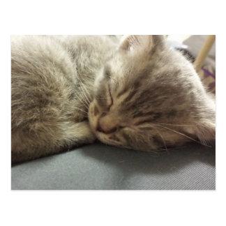 cartão 2 do gato do sono