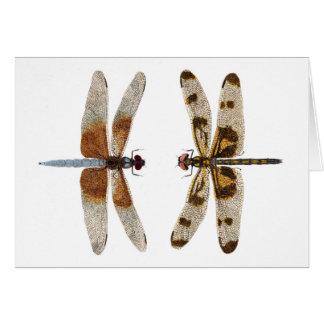 Cartão 2 libélulas