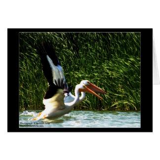 Cartão 2 pelicanos