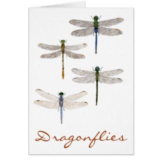 Cartão 4 espécies da libélula
