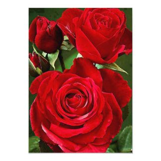"""cartão 5"""" da rosa vermelha x 7"""" branco básico convite 12.7 x 17.78cm"""