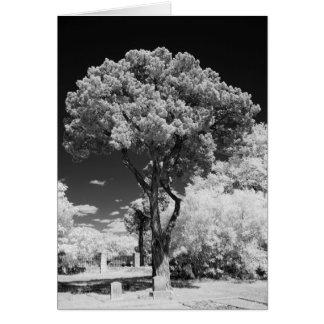 Cartão 5x7 da árvore de Live Oak, vazio para