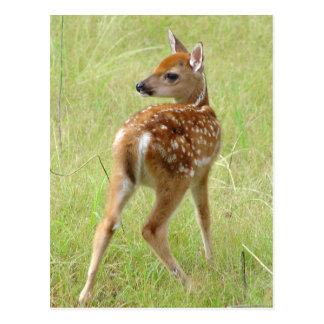 Cartão 6 da jovem corça dos cervos de Whitetail