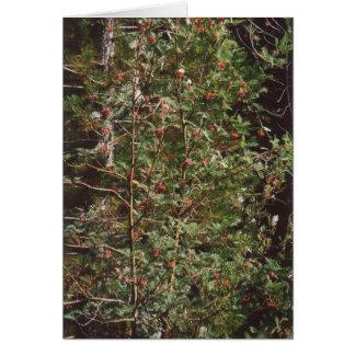 Cartão 72. Comida de pássaro - bagas em uma árvore