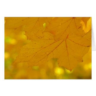 Cartão 9 da árvore de bordo 2011 da queda