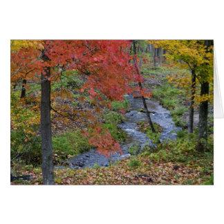 Cartão A angra de Coles alinhou com as árvores de bordo