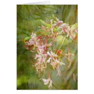 Cartão A azálea selvagem floresce = primavera