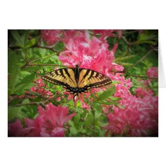 Cartão A borboleta de Swallowtail senta-se em azáleas